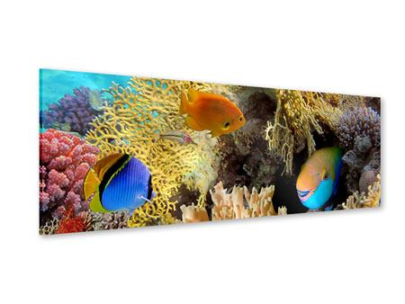 Panoramic Acrylic Print Fish Wealth