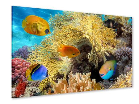 Acrylic Print Fish Wealth