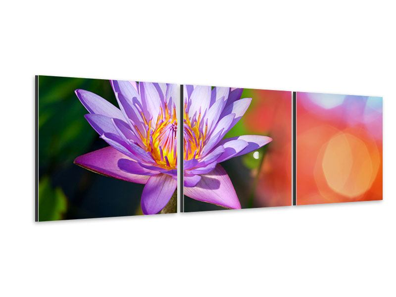 Panorama Aluminiumbild 3-teilig Colored Lotus