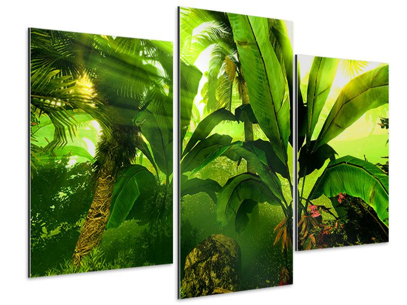 Modern 3 Piece Aluminium Print Sunrise In The Rainforest