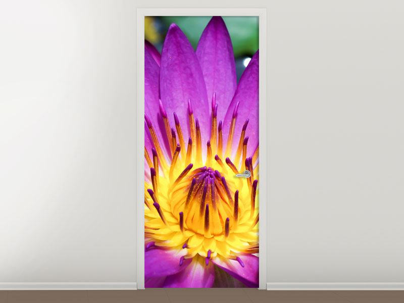 Door Mural Macro Water Lily In Purple