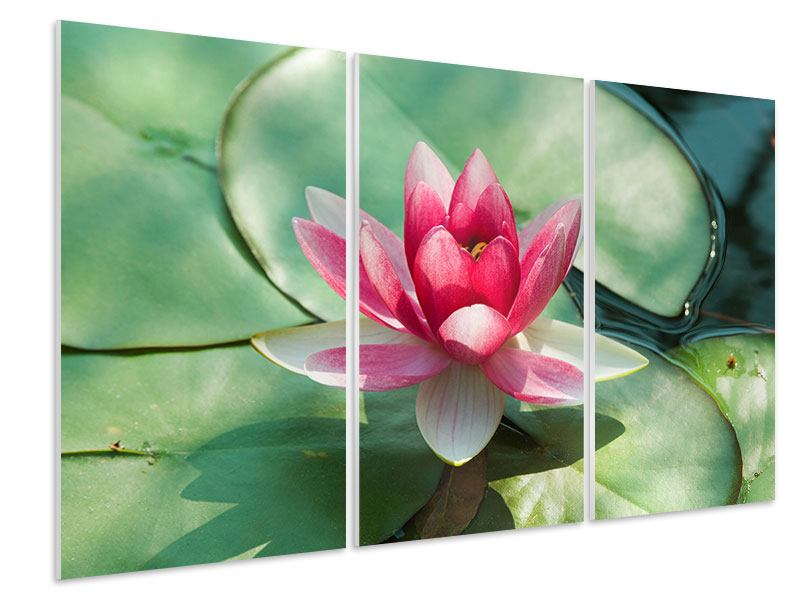 3 Piece Forex Print The Frog And The Lotus Leaf