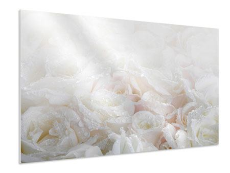 Forex Print White Roses In The Morning Dew