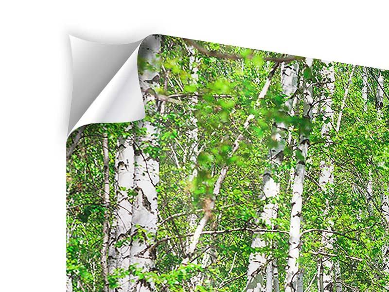 4 Piece Self-Adhesive Poster The Birch Forest