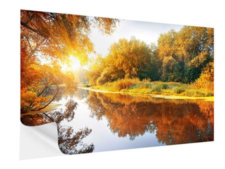 Self-Adhesive Poster Forest Reflection In Water