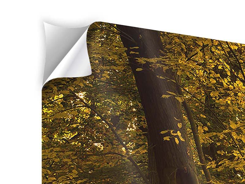 5 Piece Self-Adhesive Poster Autumn Leaves