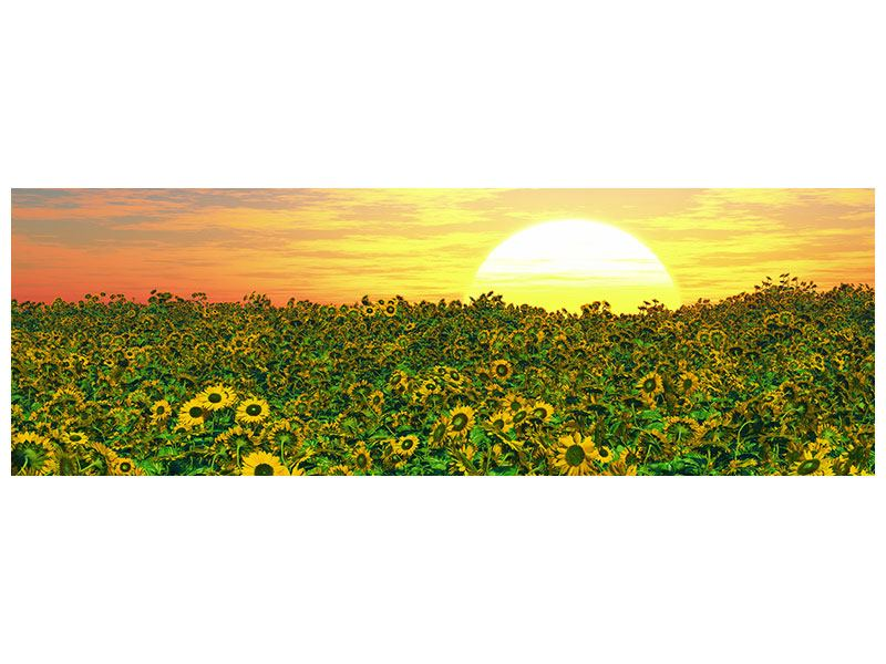Panoramic Canvas Print Flowers Panorama At Sunset