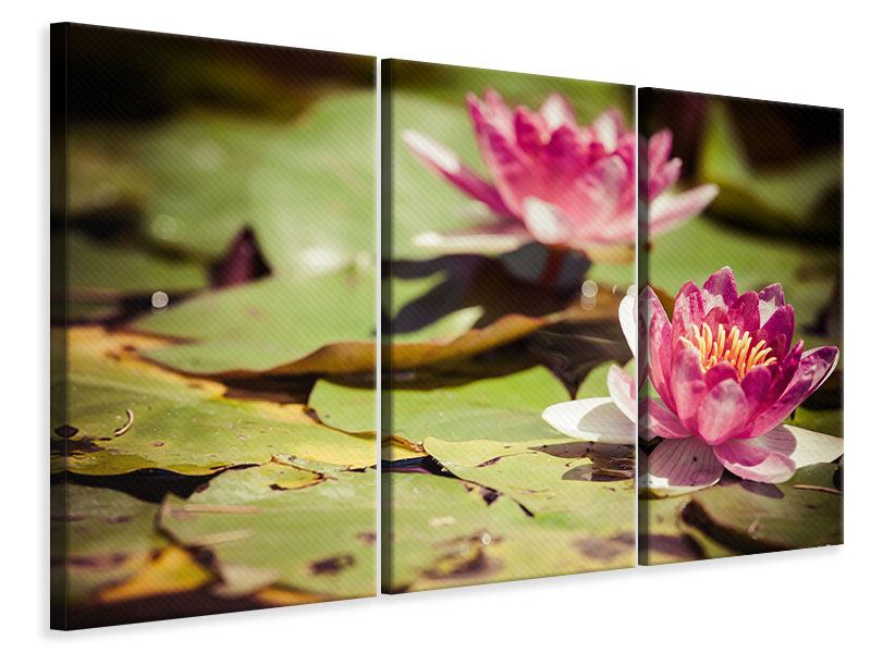 3 Piece Canvas Print Lilies At Sunrise