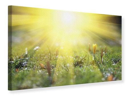 Canvas Print Flowery Meadow