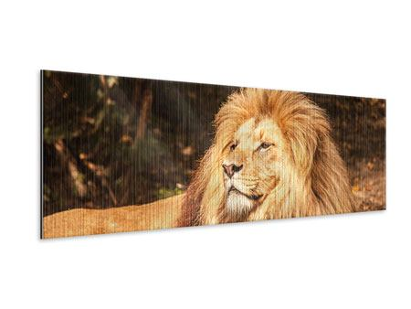 Panoramic Metallic Print Lion