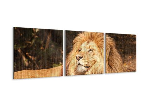 Panoramic 3 Piece Metallic Print Lion