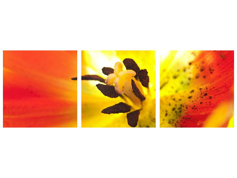 Panoramic 3 Piece Poster The Scar Of A Tulip XXL