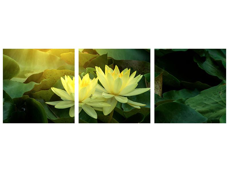 Panoramic 3 Piece Poster Wild Lotus